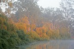 Sunrise on the willows at Lock 9