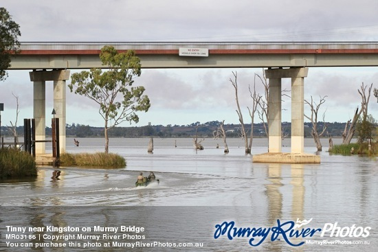 Tinny near Kingston on Murray Bridge
