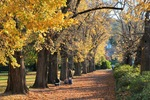 Autumn in Albury Botanic Gardens