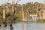 Houseboat near Renmark