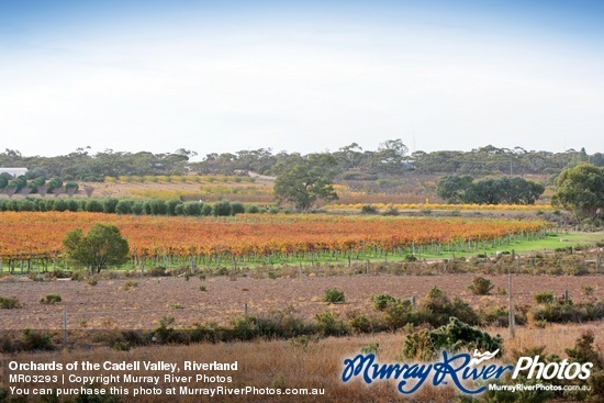 Orchards of the Cadell Valley, Riverland