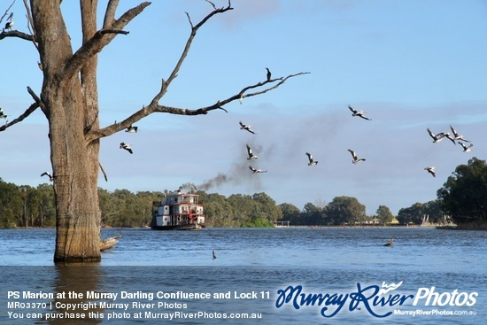 PS Marion at the Murray Darling Confluence and Lock 11