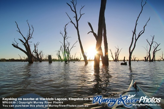 Kayaking on sunrise at Wachtels Lagoon, Kingston-on-Murray