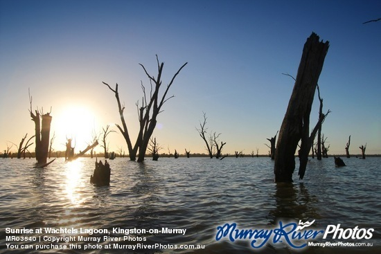 Sunrise at Wachtels Lagoon, Kingston-on-Murray