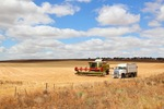Wheat header and truck near Karoonda, Mallee