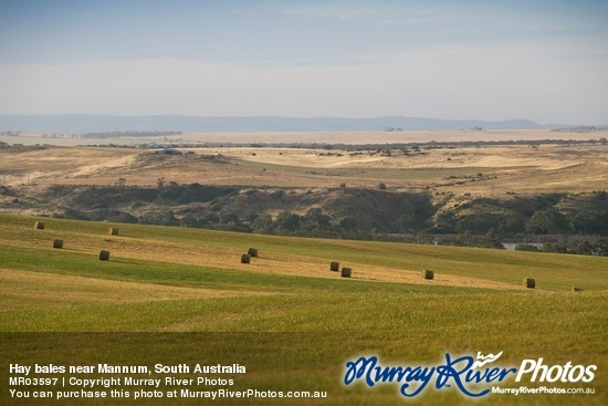 Hay bales near Mannum, South Australia
