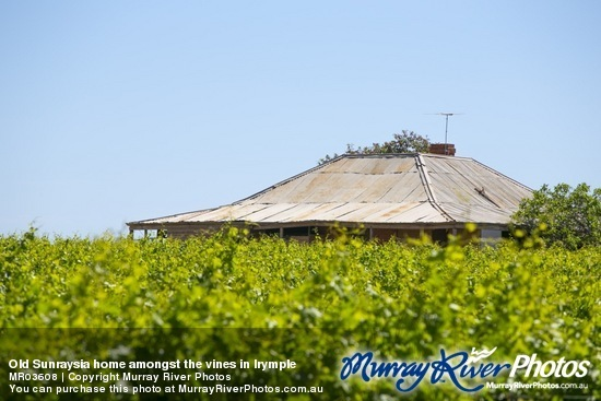 Old Sunraysia home amongst the vines in Irymple