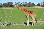 Monarto Zoo, South Australia