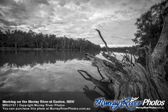 Morning on the Murray River at Euston, NSW