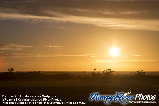 Sunrise in the Mallee near Walpeup