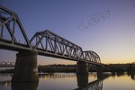 Birds over Murray Bridge, South Australia
