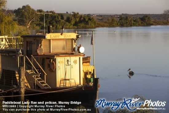 Paddleboat Lady Rae and pelican, Murray Bridge