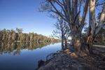 Murray River at Robinvale