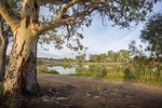 Holder Bend at Waikerie