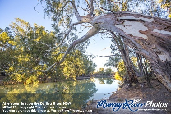 Afternoon light on the Darling River, NSW