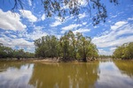 Murray River at Boundary Bend, Victoria