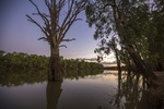 Dusk on the Murray River at Euston, NSW