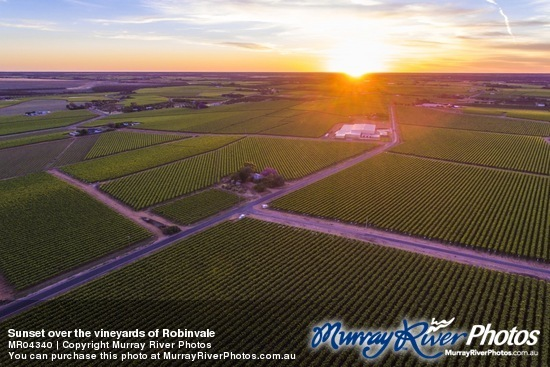 Sunset over the vineyards of Robinvale