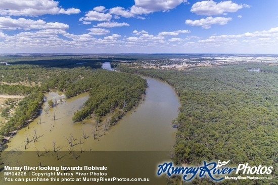Murray River looking towards Robivale
