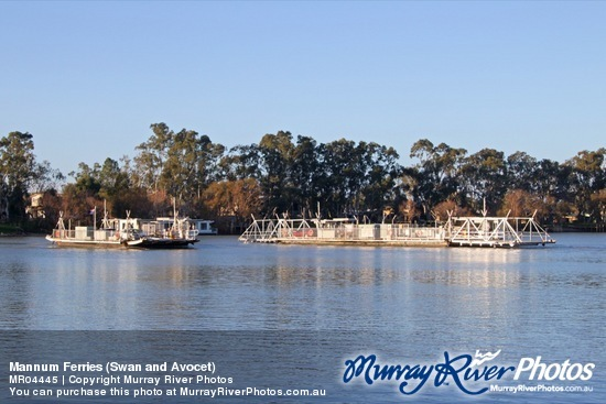 Mannum Ferries (Swan and Avocet)