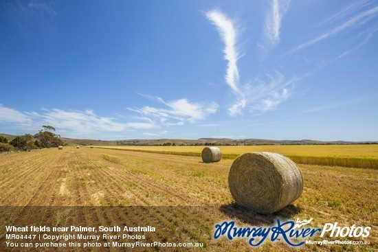 Wheat fields near Palmer, South Australia