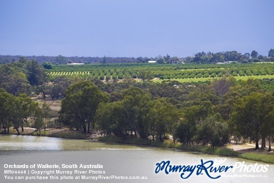 Orchards of Waikerie, South Australia