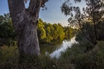 Murray River west of Corowa, NSW