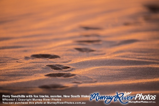 Perry Sandhills with fox tracks, sunrise, New South Wales
