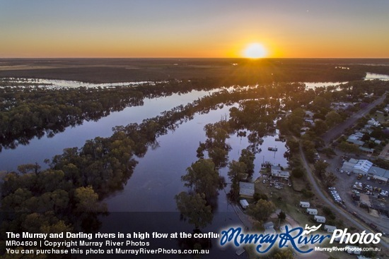 The Murray and Darling rivers in a high flow at the confluence, Wentworth, New South Wales