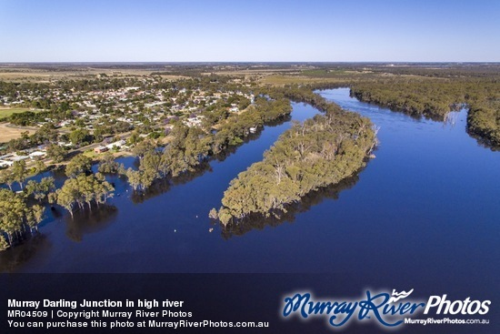Murray Darling Junction in high river